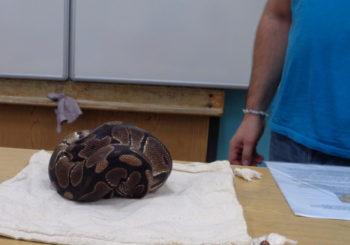 Hadí návštěva